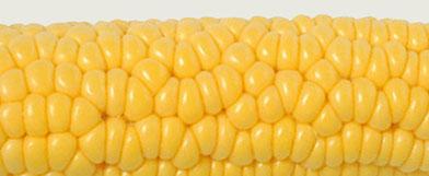 corn based plastics, NatureWorks® polymer