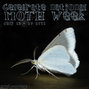 National Moth Week 2012