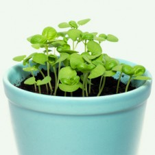 earth friendly indoor projects