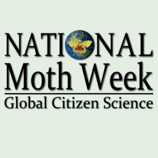 National Moth Week 2013