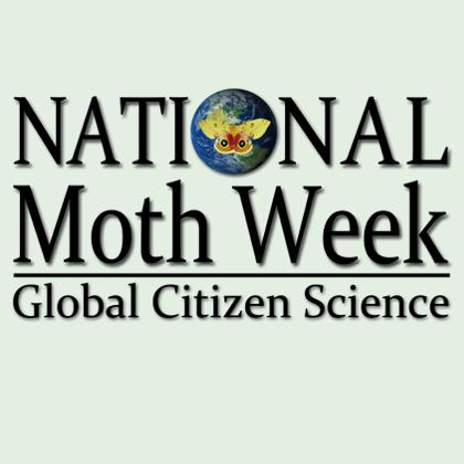 National Moth Week 2013
